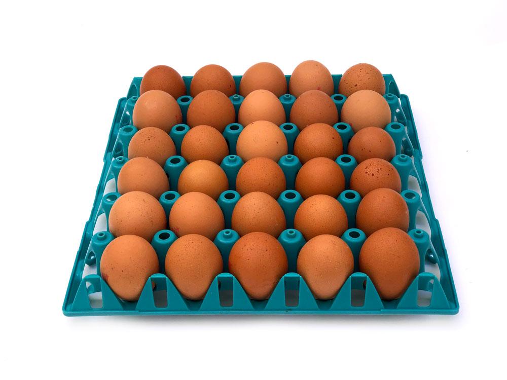 huevos-granel